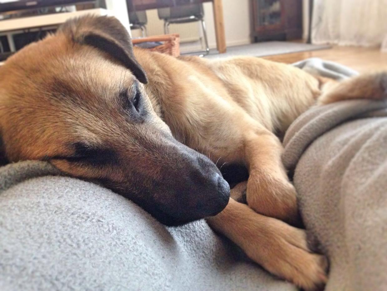 5 Gründe für ein Leben mit Hund