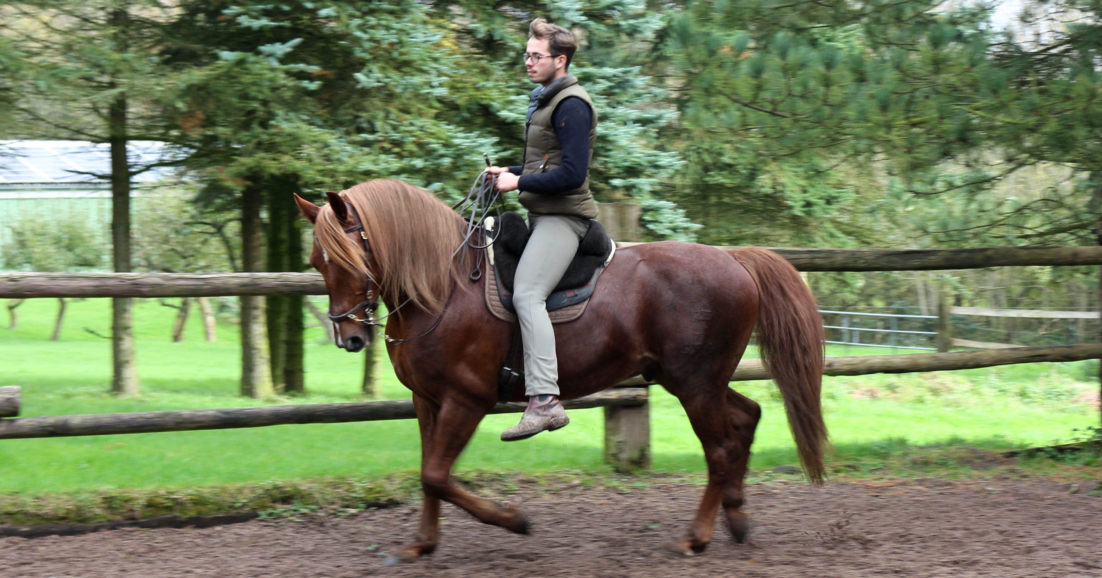 Ein Traum von königlichen Pferden