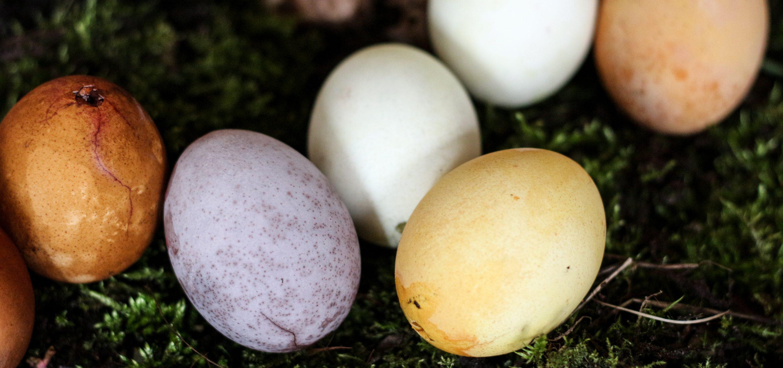 Ostereier färben mit Naturfarben