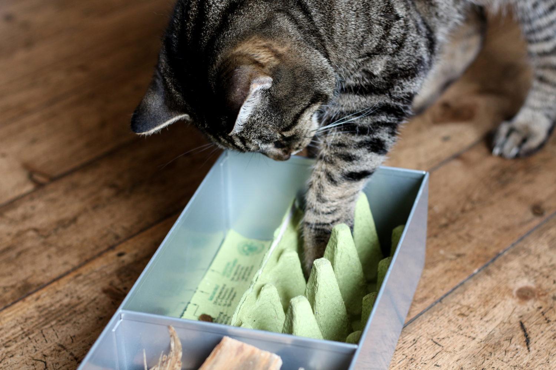DIY Beschäftigungsbox für Katzen