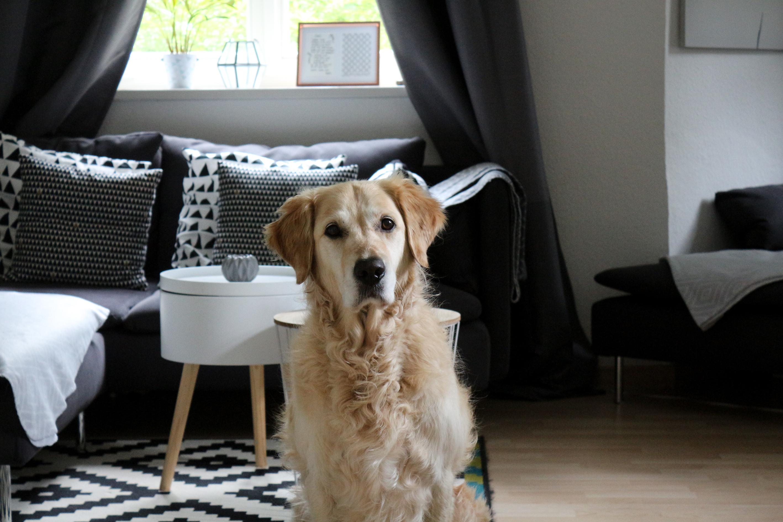Was man beim Hundekauf beachten sollte
