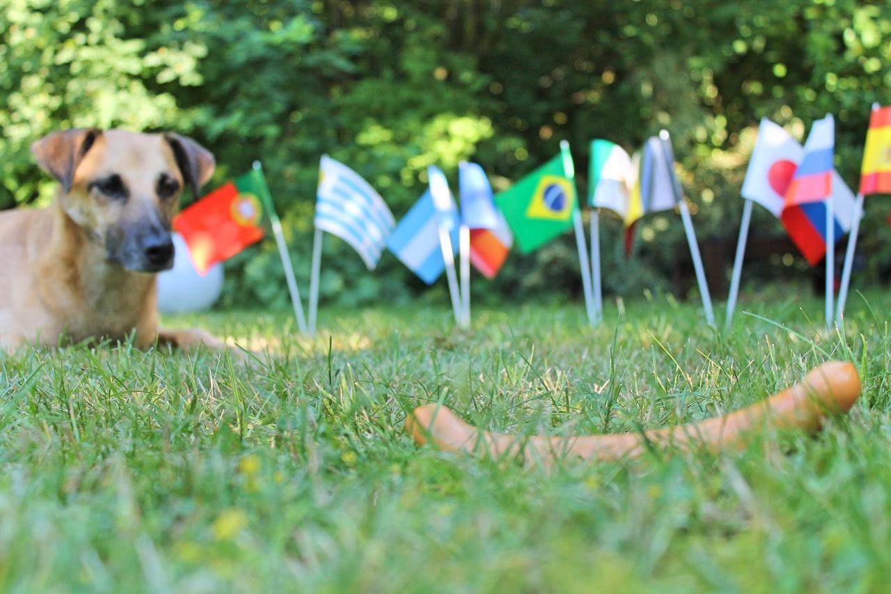 Jetzt geht's um die Wurst: das WM-Orakel