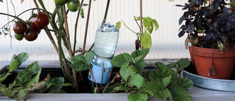Ob Kurzurlaub oder Hitze – dieser Wasserspender rettet eure Balkonpflanzen