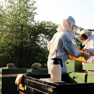 Es summt in der Stadt – Honig aus Kiel