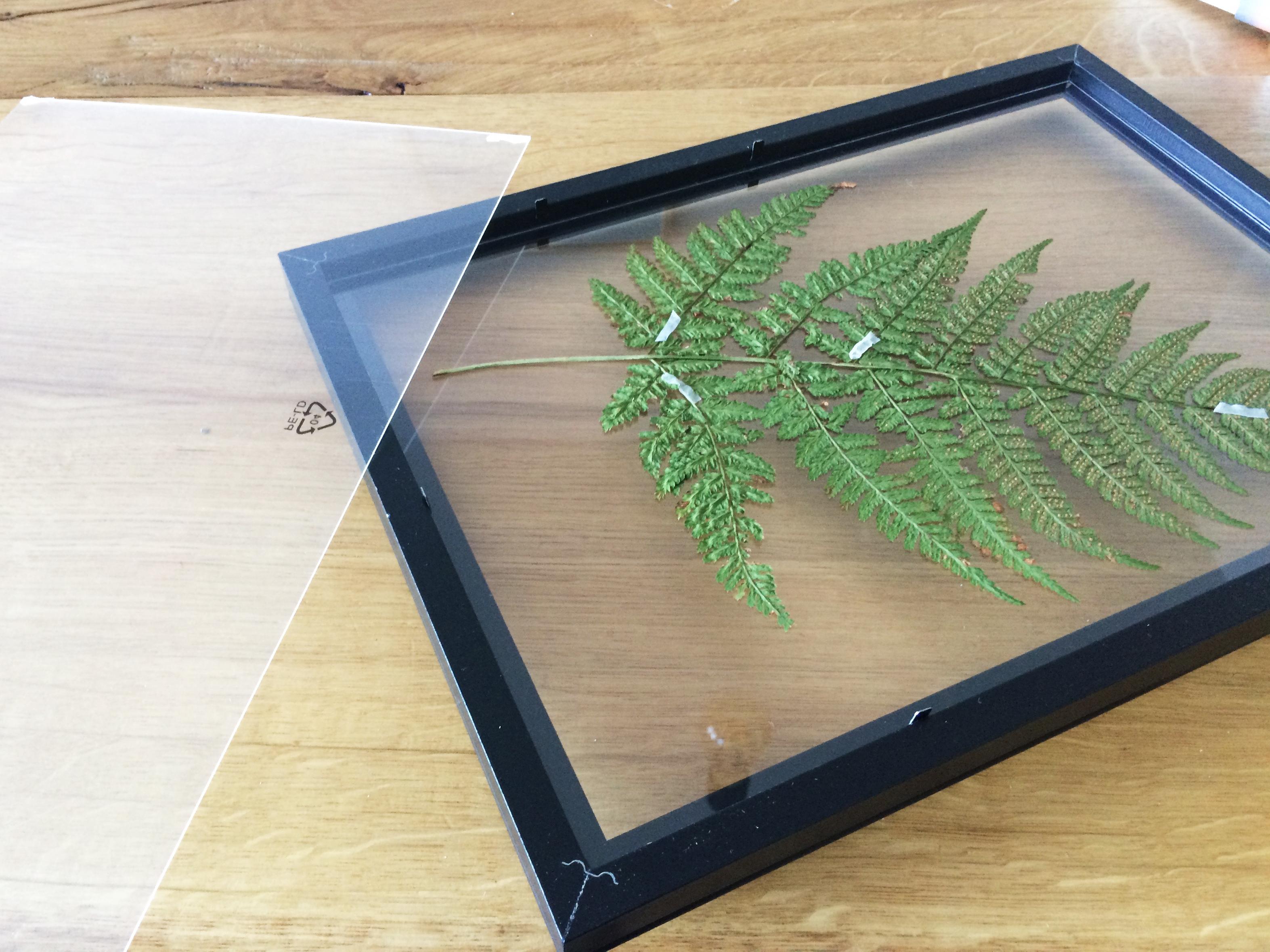 DIY Herbarium