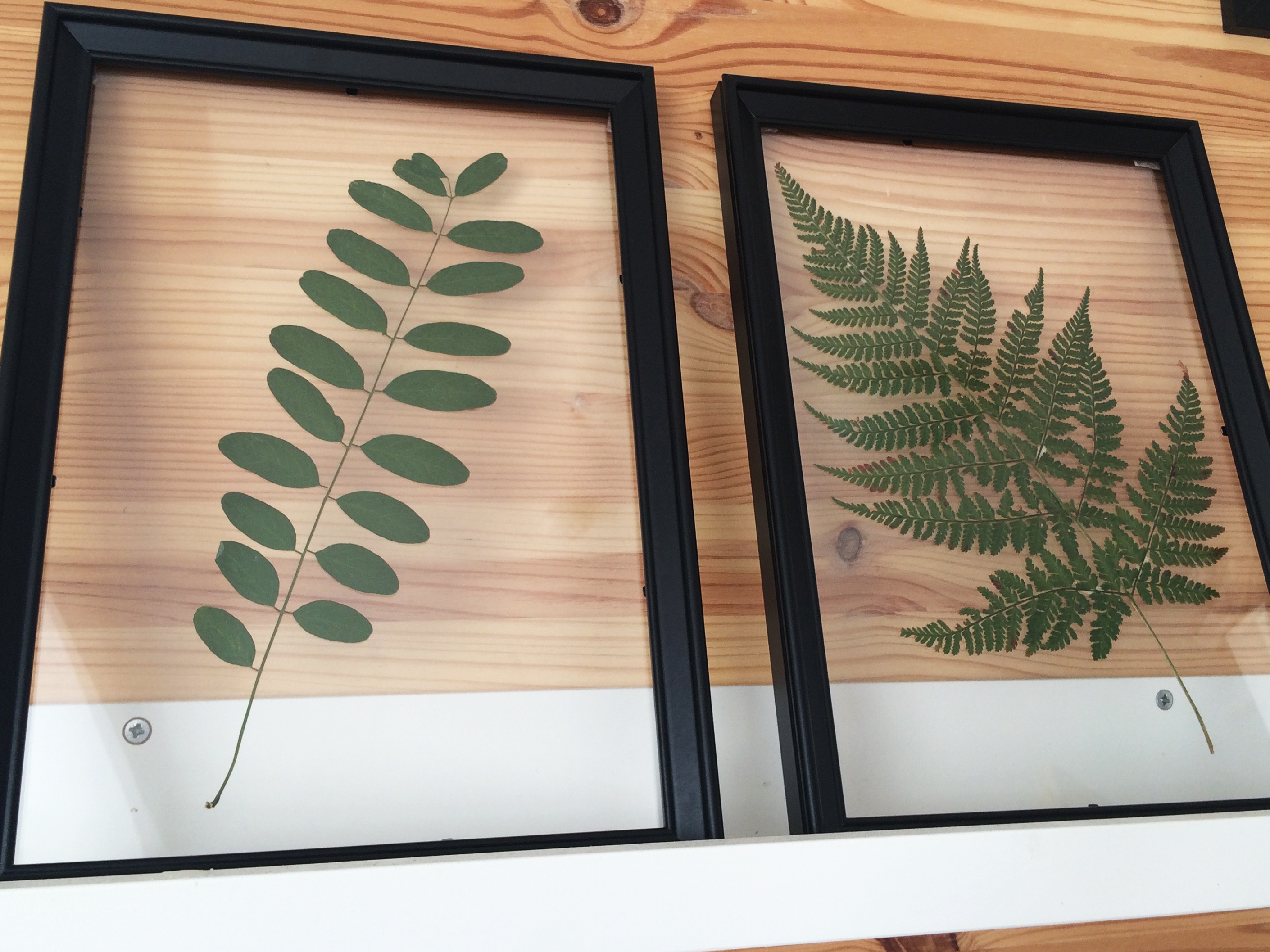 Floating Leaf Herbarium