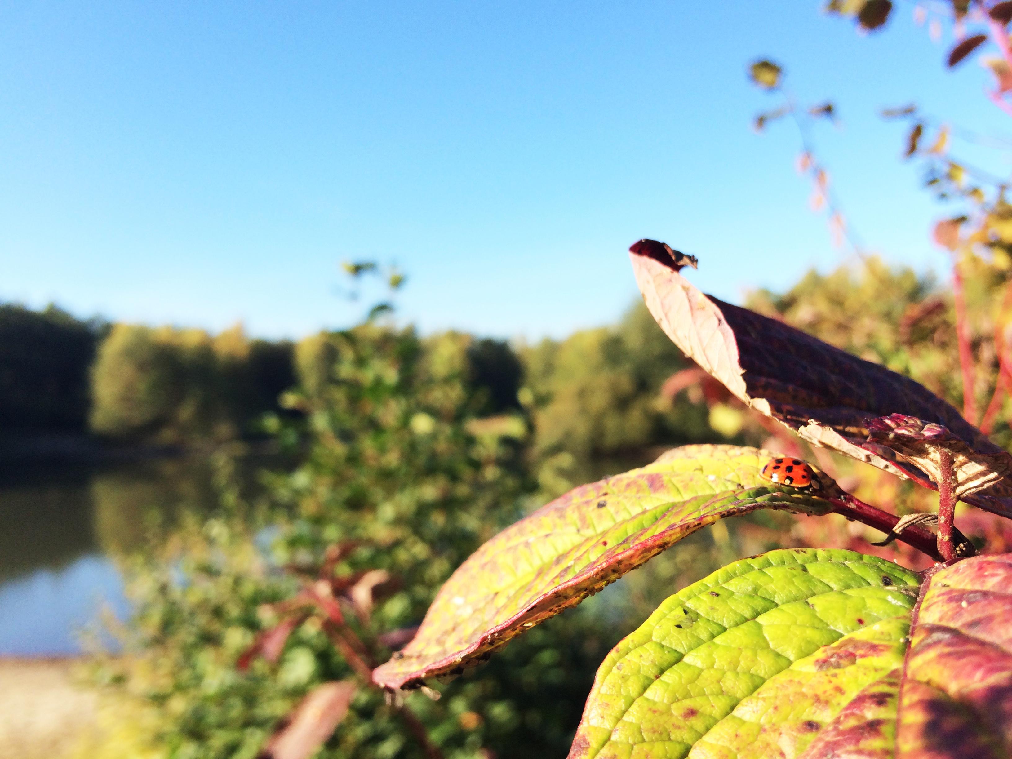 Marienkaefer im Herbst