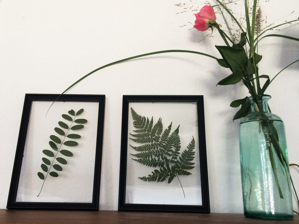 Floating Frame Herbarium