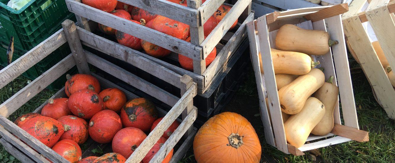 Herbst auf dem Tisch: Rezepte mit Kürbis