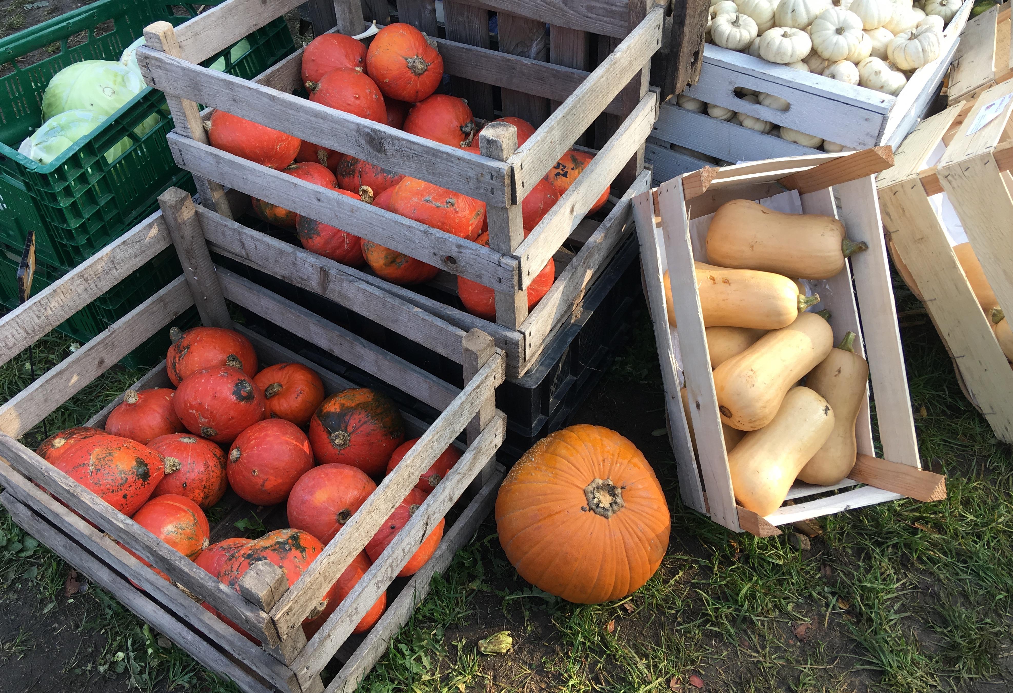 Kürbisvielfalt auf dem Markt