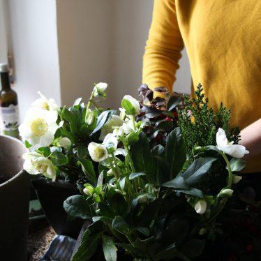Blühender Balkon – auch im Winter!