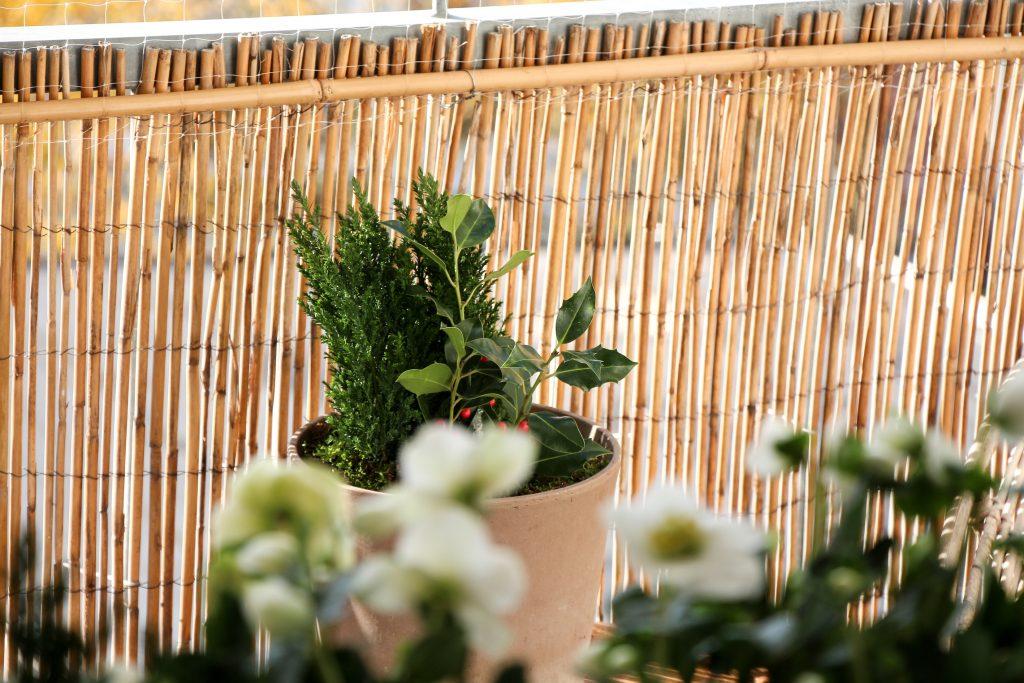 Bluhender Balkon Auch Im Winter Neue Etage