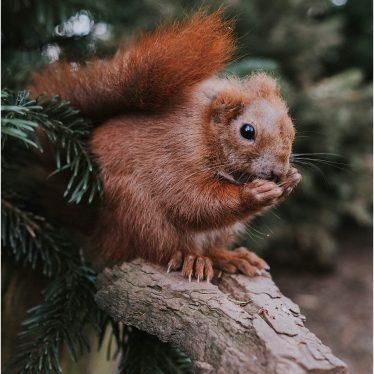 Die Eichhörnchen Schutzstation in Eckernförde