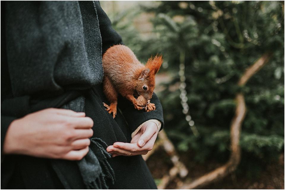 Eichhörnchen Schutzstation Eckernförde - Tilda