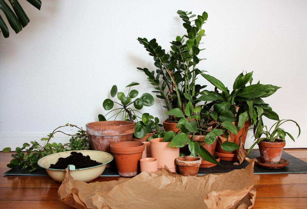 Auf in den Dschungel – Zimmerpflanzen vermehren | Neue Etage