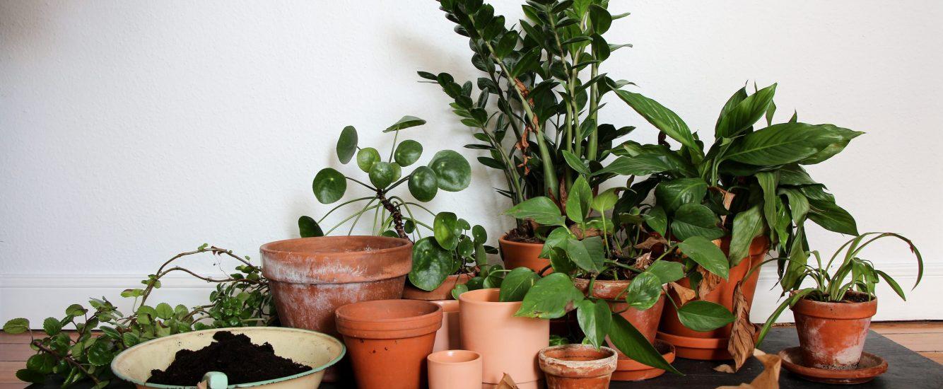 Auf in den Dschungel – Zimmerpflanzen vermehren