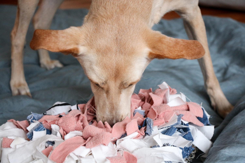 DIY Schnüffelteppich für Hund und Katze
