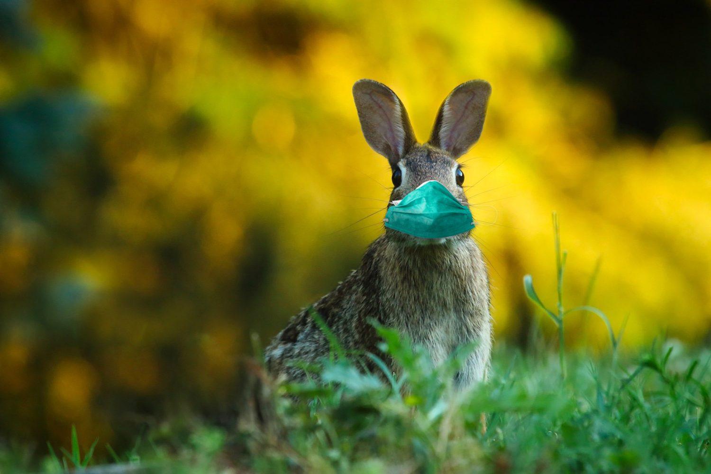 Herausforderung: Ostern und Familienfeste in Zeiten von Corona