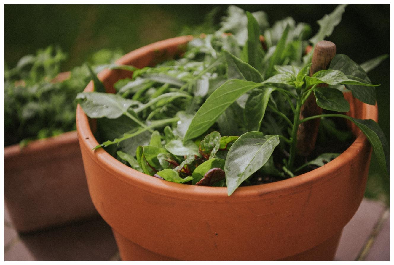 Ein Garten für deinen Balkon