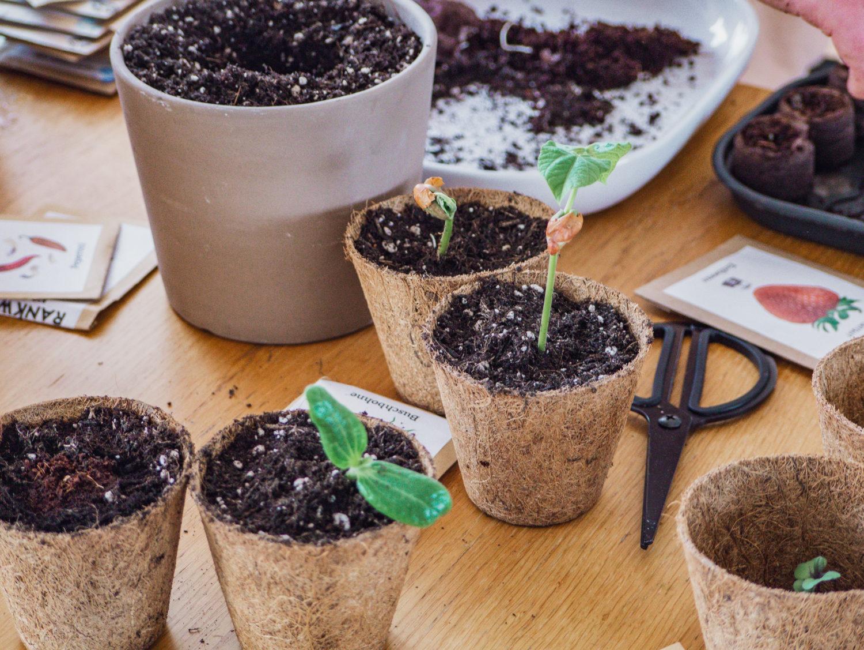 Gewinnspiel – Homegardening: Jungpflanzen erfolgreich vorziehen