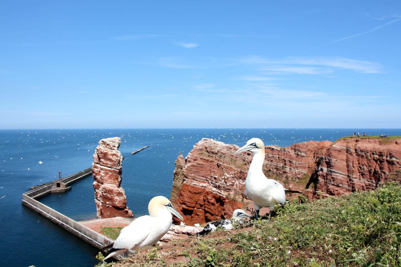 Urlaub im Norden: Auf nach Helgoland!