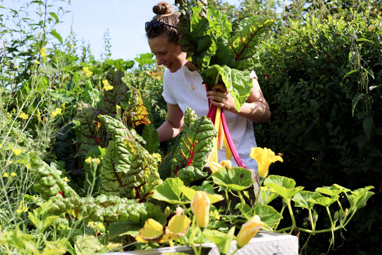 Regionale Küche im August – Sommerliche Quiche mit Mangold, Tomaten und Zucchini