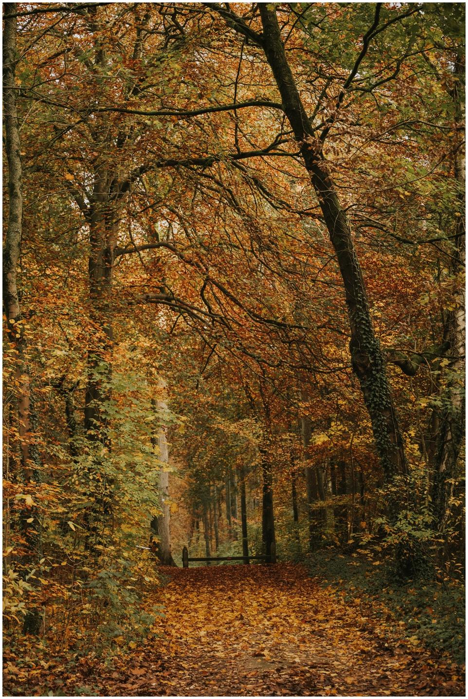 Schöne Spaziergänge im Herbst/Winter - Mölln und Umgebung