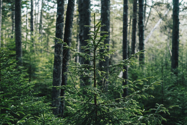Vier Alternativen zum klassischen Weihnachtsbaum – mit DIY