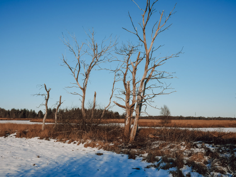 Ausflugstipp: Wildes Moor bei Osterrönfeld