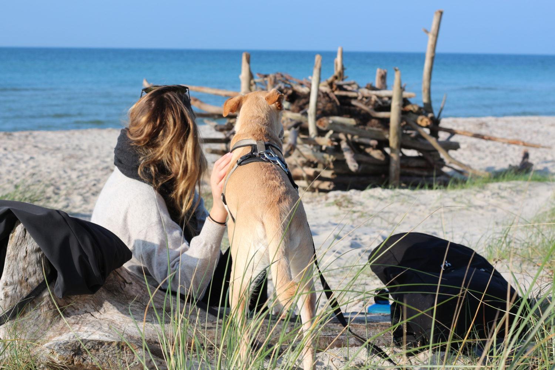 Mit dem Hund an den Strand