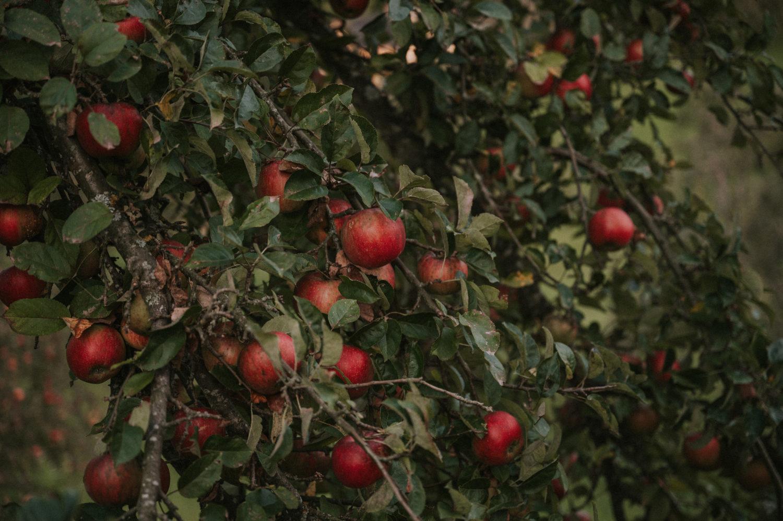 Apfel-Crumble | vegan und glutenfrei